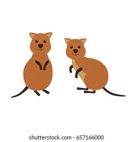 Cartoon animals. A pair of quokka