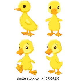 Cartoon baby duck