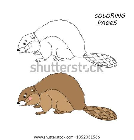 Rat free beaver tubes