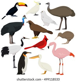 Cartoon birds collection. Different species of birds vector set. Red crowned crane, cockatoo parrot, pelican, toucan, flamingo, penguin, red cardinal, emu, cassowary, kiwi, golden eagle, polar owl.