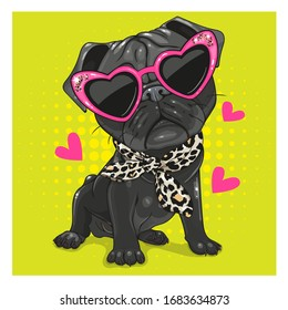 Cartoon Black Pug Dog with pink glasses and scarf isolated on a white background