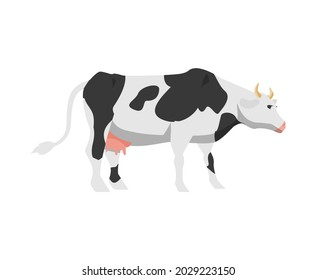 Cartoon black and white spotted cow. Holstein frisian breed domestic cattle for milk, dairy products and meat. Flat vector isolated illustration.
