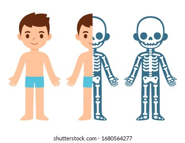 Cartoon boy skeleton anatomy chart. Simple flat vector illustration of child skeletal system cross section. Isolated vector clip art.