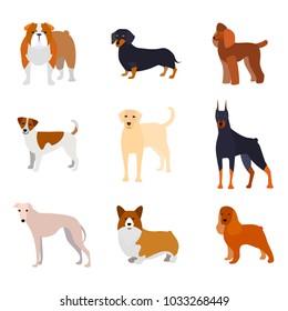 Cartoon Breed of Dogs Collection Icons Include of Doberman, Bulldog, Labrador or Retriever, Poodle and Corgi. Vector illustration