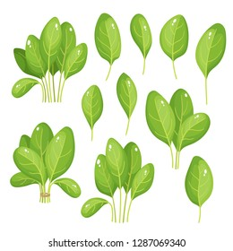 Cartoon bright spinach leaves isolated on white. Vector set of fresh farm organic green herbs used for magazine, book, poster, card, menu cover, web pages.