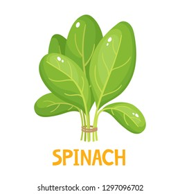 Cartoon bright spinach leaves isolated on white. Vector illustration of fresh farm organic green herbs used for magazine, book, poster, card, menu cover, web pages.