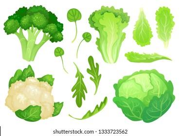 Cartoon cabbages. Fresh lettuce leaves, vegetarian diet salad and healthy garden green cabbage. Cauliflower head, broccoli or diet fresh vegetarian cooking greens vector illustration
