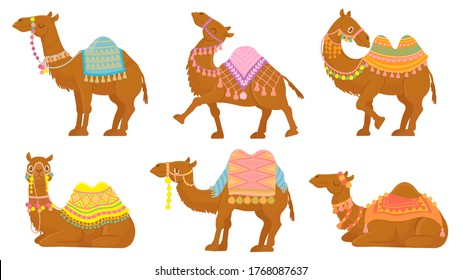 Cartoon camel. Funny desert animals with saddle. Camels vector isolated characters set. Wild and domesticated Arabian pet for ride with decorated seat in various positions, lying, standing