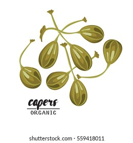 Cartoon capers. Ripe green vegetable. Vegetarian delicious. Eco organic food. Flat vector design, isolated on white background.