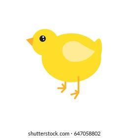 Cartoon chicken vector illustration. Yellow chick bird isolated on white.
