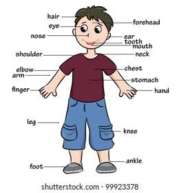 Cartoon child. Vocabulary of body parts. Vector illustration.