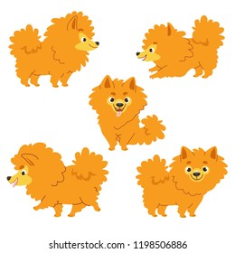 Cartoon collection of dogs: Pomeranian Spitz. Vector illustration. Isolated on white background.