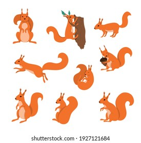 Cartoon Color Characters Squirrels Icons Set Concept Flat Design Style. Vector illustration of Character Mascot Squirrel
