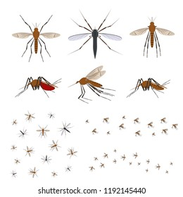 Cartoon Color Different Mosquito Icon Set Insect Symbol of Malaria, Epidemic and Pest. Vector illustration of Bloodsucker Icons