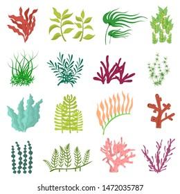 Cartoon Color Different Seaweed Icon Set Underwater Plant Concept Flat Design. Vector illustration of Aquarium Algae Icons