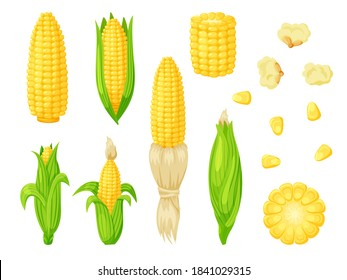 Cartoon corn agriculture meal harvesting set. Golden maize corncob delicious vegetable harvest, popcorn corny grain, sweet corn seed and stalk vector illustration isolated on white background