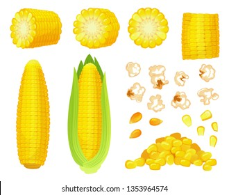 Cartoon corn. Golden maize harvest, popcorn corny grains and sweet corn. Ear of corn, delicious vegetables or corns cob. Agriculture meal harvesting isolated vector illustration icons set