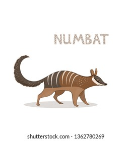 A cartoon cute numbat, isolated on a white background. Animal alphabet.