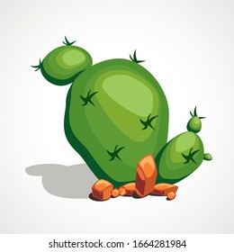 Cartoon desert green round cactus. Vector illustration.