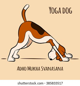 Cartoon dog shows yoga pose Adho Mukha Svanasana - Downward Facing Dog. Surya Namaskara. San Salutation. Beagle vector illustration