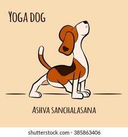 Cartoon dog shows yoga pose Ashva Sanchalasana - yin pose. Surya Namaskara. San Salutation. Beagle vector illustration