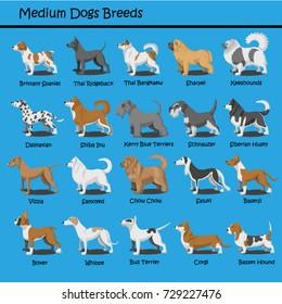 Cartoon dogs characters Meduim breeds doggy illustration,Brittany Spaniel,Sharpei,Keeshounds,Dalmatian,Shiba,Schnauzer,Siberian Husky,Vizsla,Samoyed,Saluki,Basenji,Boxer,Whippe,Corgi,Basset Hound