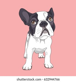 Royalty Free French Bulldog Cartoon Stock Images Photos Vectors