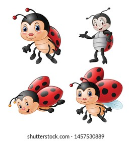 Cartoon funny ladybug illustration collections