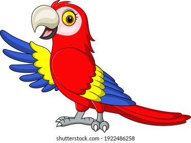 Cartoon funny macaw presenting on white background
