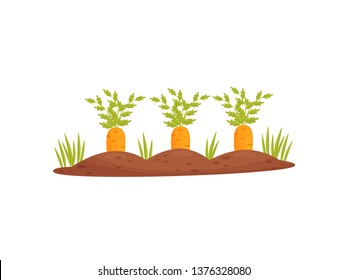 Cartoon garden bed with carrots on a white background. Vector illustration.