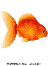 Cartoon goldfish isolated on white background