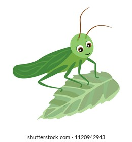 Cartoon grasshopper on green leaf. Vector illustration in children's style on white background. Simple and flat concept art.