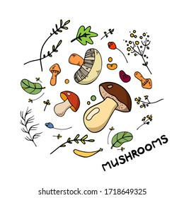 Cartoon hand drawn mushrooms  with herbs  and beens on white background