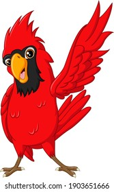 Cartoon happy cardinal bird on white background