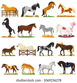 Cartoon horse vector cute animal of horse-breeding or equestrian and horsey or equine stallion illustration animalistic horsy set of pony zebra character isolated on background