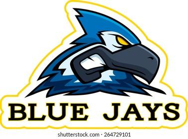 A cartoon illustration of a blue jay mascot head.