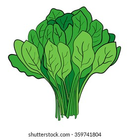 Cartoon illustration of a bundle of spinach
