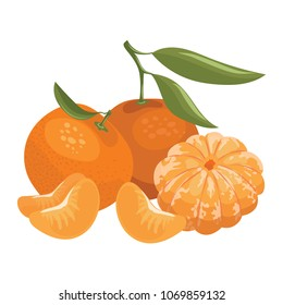 Cartoon illustration of a mandarin. Vector illustration of oranges on a white background. Illustration for children.
