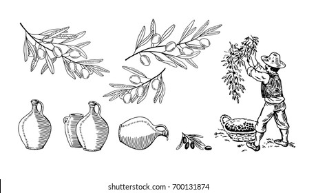 Cartoon illustration with olives branches, the farmer gathers the harvest of ripe olives and jugs. Design for olive oil, natural cosmetics. Hand-drawn monochrome black and white illustration