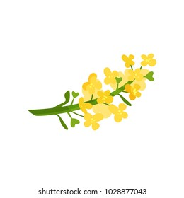Cartoon illustration of small yellow flowers on green stalk. Wild blooming herb. Floral or botanical theme. Flat vector element for concept about rapeseed oil