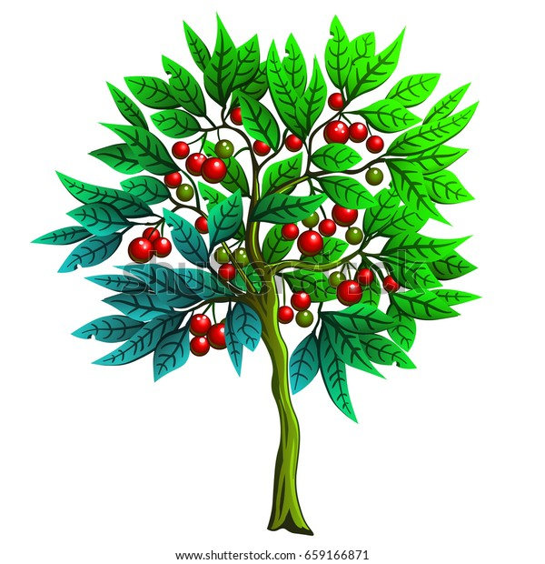 Cartoon Illustration Tree Red Berries Cherry Stock Vector Royalty Free 659166871 Download 190,000+ royalty free tree cartoon vector images. https www shutterstock com image vector cartoon illustration tree red berries cherry 659166871