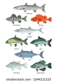 Cartoon illustrations of freshwater and ocean fishes. Vector collection of fish wildlife, crappie and tuna, carp and buffalo, rockfish and barracuda