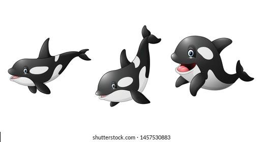 Cartoon killer whale illustration colelctions