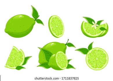 Cartoon lime. Colorful whole, half and slice lime with green leaf. Set of fresh lime.