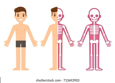 Cartoon male skeleton anatomy chart. Simple flat vector illustration of man and skeletal system cross section.