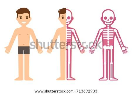 Cartoon Male Skeleton Anatomy Chart Simple Stock Vektorgrafik