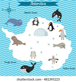 Cartoon map of Antarctica continent with different animals. Colorful cartoon illustration for children and kids. Antarctica mammals and sea life. Cartoon design concept for kids education.