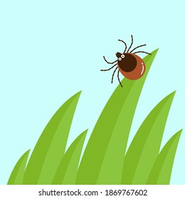 Cartoon mite in the tall green grass flat vector illustration, mite hiding in the grass, tick-borne mite color icon, danger tick bug in nature grass
