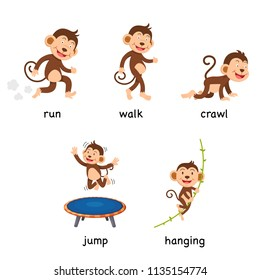 cartoon monkey vocabulary vector illustration