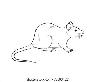 Rats Draw Images Stock Photos Vectors Shutterstock